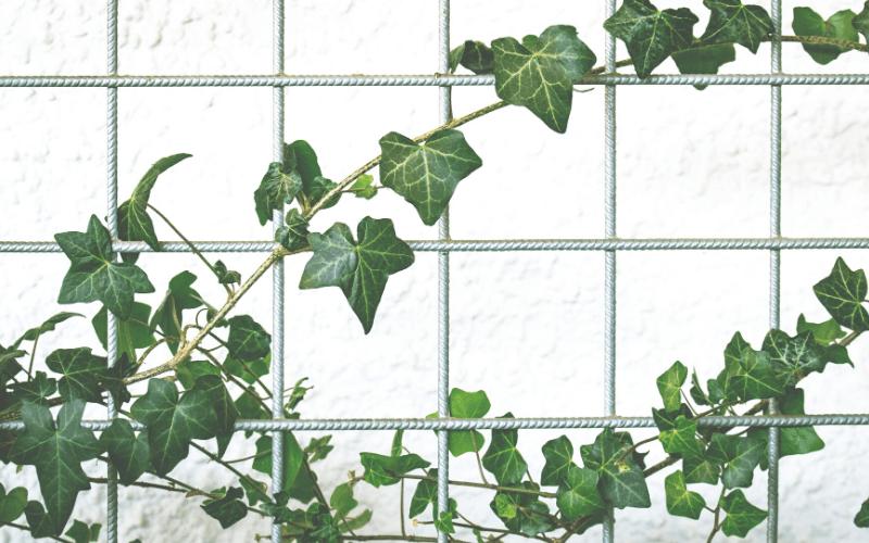 pared-tienda-ecológica-decorashop.com